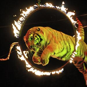 Цирки Сусанино