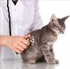 Ветеринарные клиники в Сусанино